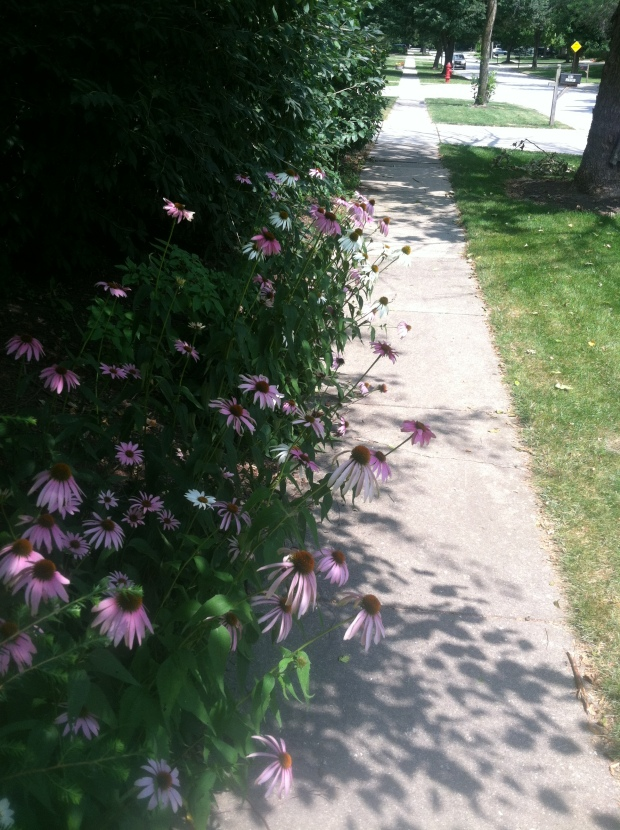 Beautiful flowers I brushed by on my morning run